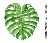 hand drawn watercolor monstera... | Shutterstock . vector #678701983