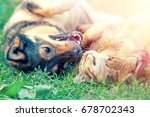 Small photo of Dog and cat best friends playing together outdoor. Lying on the back on grass.