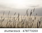 golden wheat field and sunny day | Shutterstock . vector #678773203
