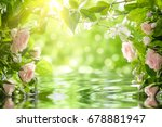 pink roses with leaves  shallow ... | Shutterstock . vector #678881947