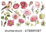 Stock photo set watercolor elements of flower rose peonies hydrangea collection garden and wild flowers 678889387
