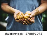 organic vegetables. farmers... | Shutterstock . vector #678891073