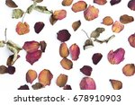 Dry Pink And Red Rose Petals...