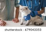 Stock photo cute cat is lying at the veterinarian while doctor is treating it 679043353