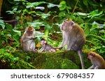 monkeys in ubud monkey forest ... | Shutterstock . vector #679084357