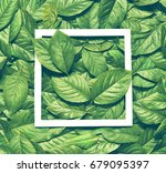 creative layout made of leaves... | Shutterstock . vector #679095397
