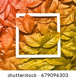 creative layout made of leaves... | Shutterstock . vector #679096303