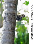 Small photo of Butterfly with tattered wings.