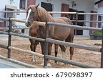 The Horse In The Corral