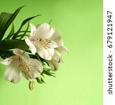 Small photo of White Alstroemeria. White flower on a green background