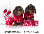 Stock photo puppy dachshund new year s puppy christmas dog 679144633
