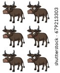wild buffalo with different... | Shutterstock .eps vector #679213303