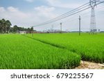 rice paddy in the farm .... | Shutterstock . vector #679225567