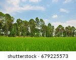 rice paddy in the farm .... | Shutterstock . vector #679225573