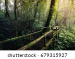 Beautiful Rain Forest At Natur...