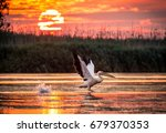 pelicans flying at sunrise in...   Shutterstock . vector #679370353