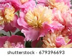 bouquet of beautiful peony... | Shutterstock . vector #679396693
