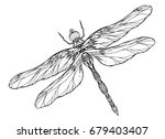 black and white dragonfly... | Shutterstock .eps vector #679403407