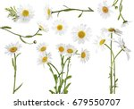 collage of beautiful chamomile... | Shutterstock . vector #679550707