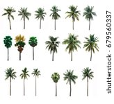 collection  palm coconut ... | Shutterstock . vector #679560337