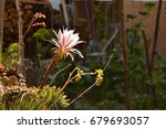 colorful cactus blooming | Shutterstock . vector #679693057