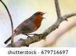 robin red breast  britain's... | Shutterstock . vector #679716697