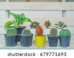 Small photo of rambutan among cactuses,dare to be different,being different concept with red rambutan among cactuses,Think difference,Originality is a mark of genius,be yourself