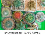 Small photo of The ambutan among cactuses, dare to be different, being a different concept with red rambutan among cactuses, Think difference, Originality is a mark of genius, be yourself