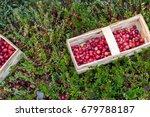 basket with fresh cranberries... | Shutterstock . vector #679788187