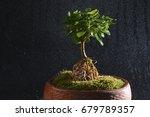 spring rain raining and... | Shutterstock . vector #679789357
