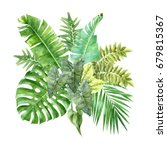 watercolor tropical leaves... | Shutterstock . vector #679815367