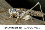 grasshoppers are insects of the ... | Shutterstock . vector #679907413