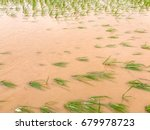 agriculture rice field flooded... | Shutterstock . vector #679978723