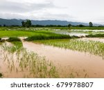 agriculture rice field flooded... | Shutterstock . vector #679978807