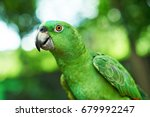 portrait of domestic green... | Shutterstock . vector #679992247