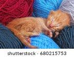 new born baby cat sleeping.... | Shutterstock . vector #680215753
