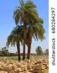 Three Palm Trees On Ruins In...
