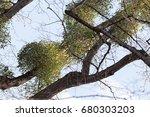 unusual tree branches  in...   Shutterstock . vector #680303203