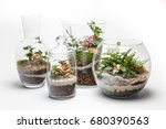 Mini Gardens  Terrariums  In A...