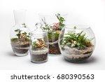 Mini Gardens  Terrariums  In A...