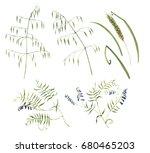 hand drawn botanical... | Shutterstock . vector #680465203