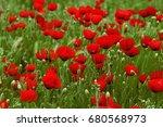 Field Of Bright Red Corn Poppy...