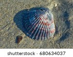 A Close Up Of A Scallop Shell...