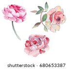 watercolor pink roses with... | Shutterstock . vector #680653387
