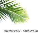 coconut  leaves on a white... | Shutterstock . vector #680669563