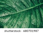 water drops on dark green leaf... | Shutterstock . vector #680701987
