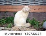 White Cross Eyed Cat.