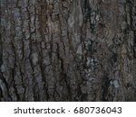Small photo of bark background