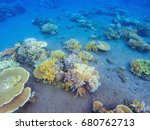 Coral Relief In Tropical...