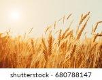 gold wheat field. beautiful... | Shutterstock . vector #680788147